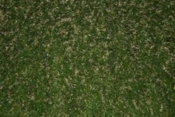 Visiegrass Melange