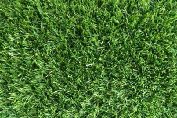 Visiegrass Emerald